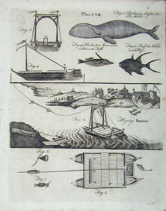 Print Encyclopaedia Britannica 1801 Whale Nature Bridge Ship 104E101 Old Original