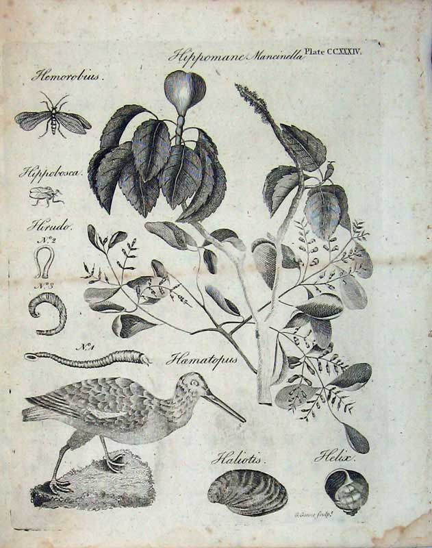 Print Encyclopaedia Britannica 1801 Nature Bird Insects Plant 156E101 Old Original