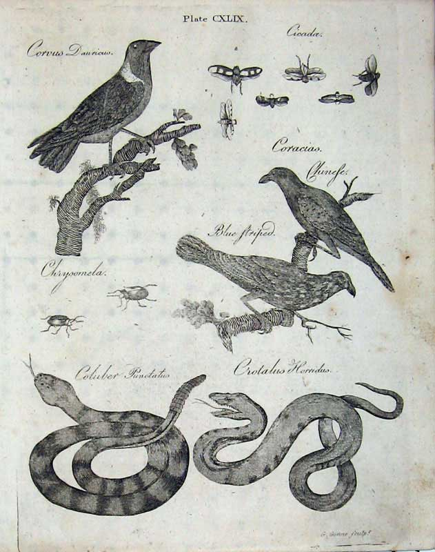 Print Encyclopaedia Britannica 1801 Nature Birds Snake Insect 169Ae101 Old Original