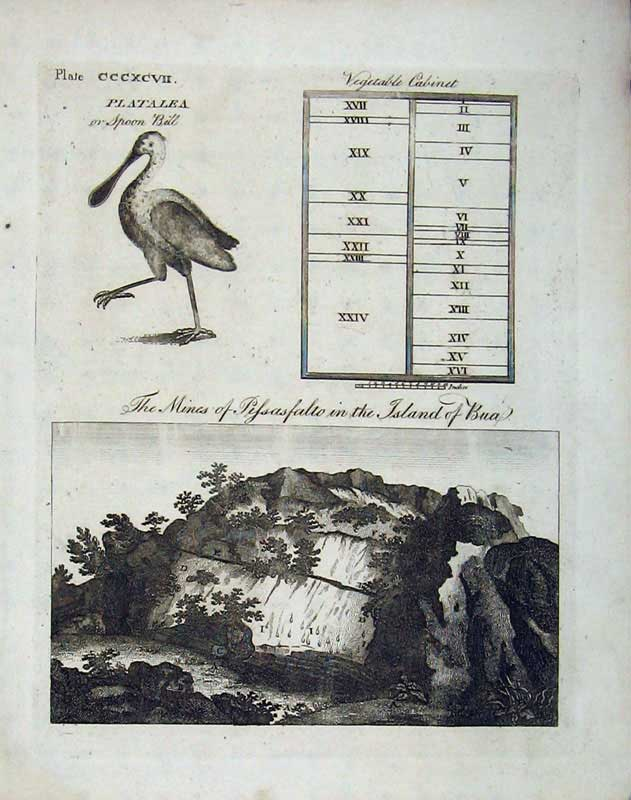 Print Encyclopaedia Britannica 1801 Spoon Bill Birds Mines 202E101 Old Original