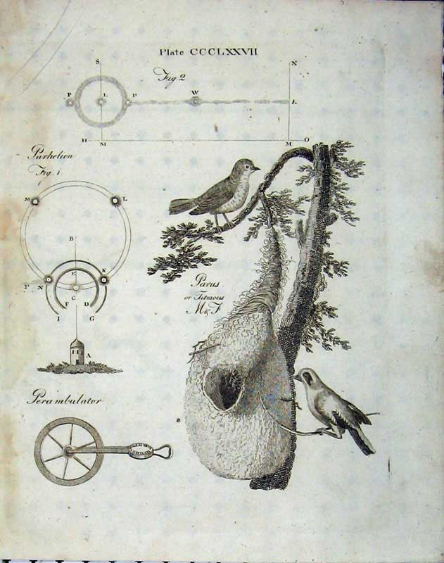 Print Encyclopaedia Britannica 1801 Nature Bird Nest Tree 282E101 Old Original