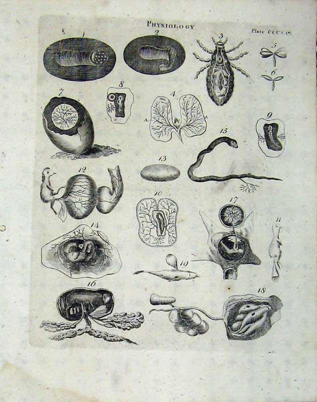 Print Encyclopaedia Britannica 1801 Physiology Insects Nature 296E101 Old Original