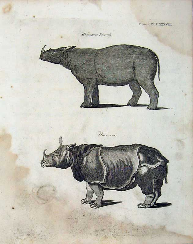 Print Encyclopaedia Britannica 1801 Nature Rhinocerous 391E101 Old Original