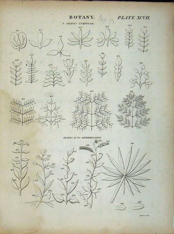 Print Encyclopaedia Britannica Botany Leaves Plants Grass 152E102 Old Original