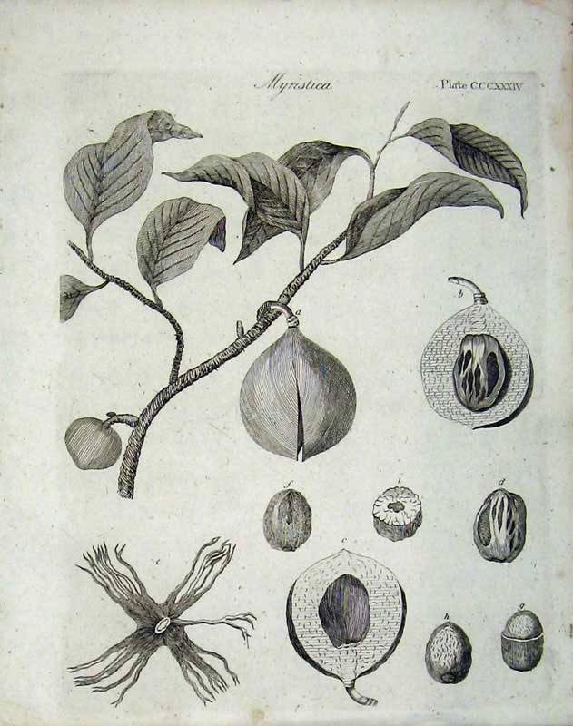 Print Myristica Encyclopaedia Britannica Plants Nature 208E104 Old Original