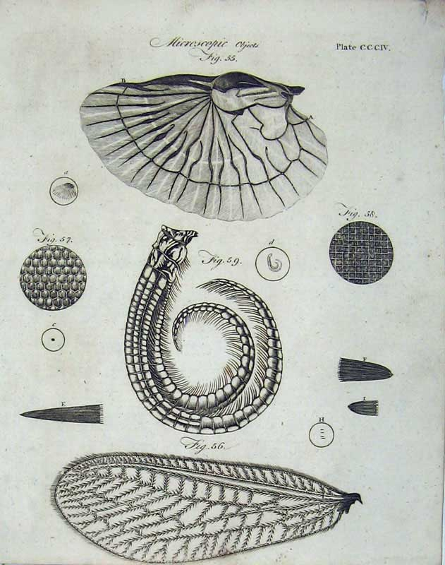 Print Microscopic Objects Science Encyclopaedia Britannica 223E104 Old Original