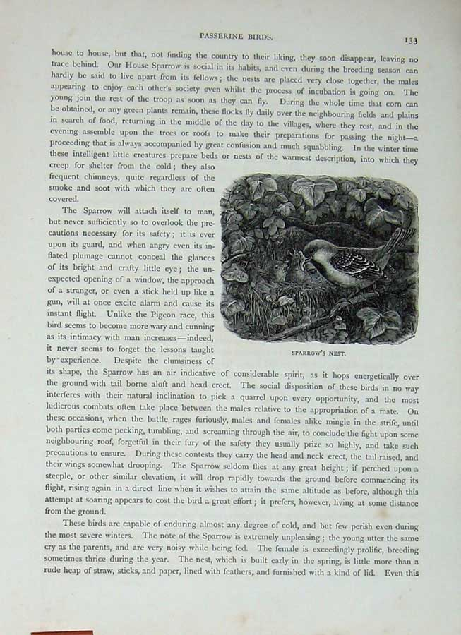 [Print Cassell'S Birds C1870 Passerine Sparrow Nest Tree Bird 394E125 Old Original]