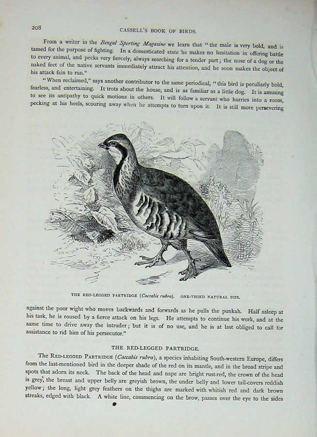 [Print Cassell'S Birds C1870 Red-Legged Partridge Caccabis 437E125 Old Original]