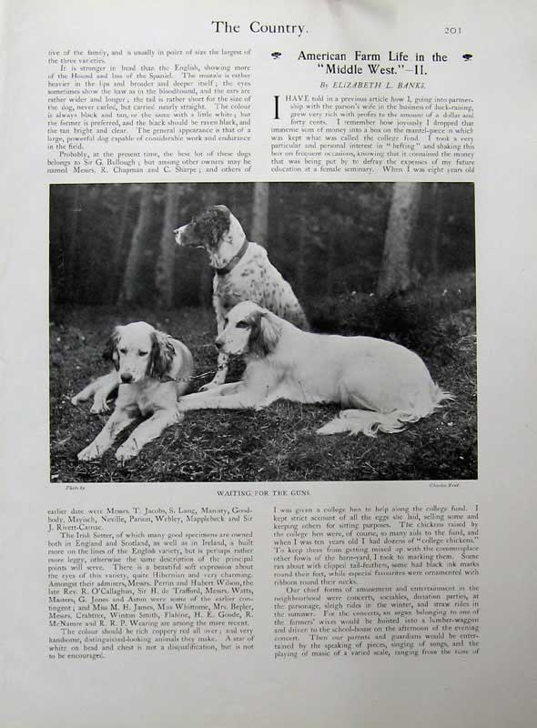 [Print 1902 Country Magazine Hunting Dogs Sport Photograph 131E143 Old Original]