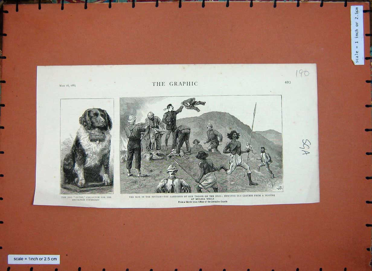 [Print Dog Clyde Inverness 1885 War Soudan Soldiers Nile Egypt 190E178 Old Original]
