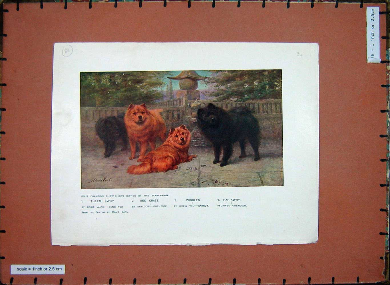 [Print Animals Dogs Chow-Chows Theem Kwhy Wiggles Hah-Kwhy 205E199 Old Original]