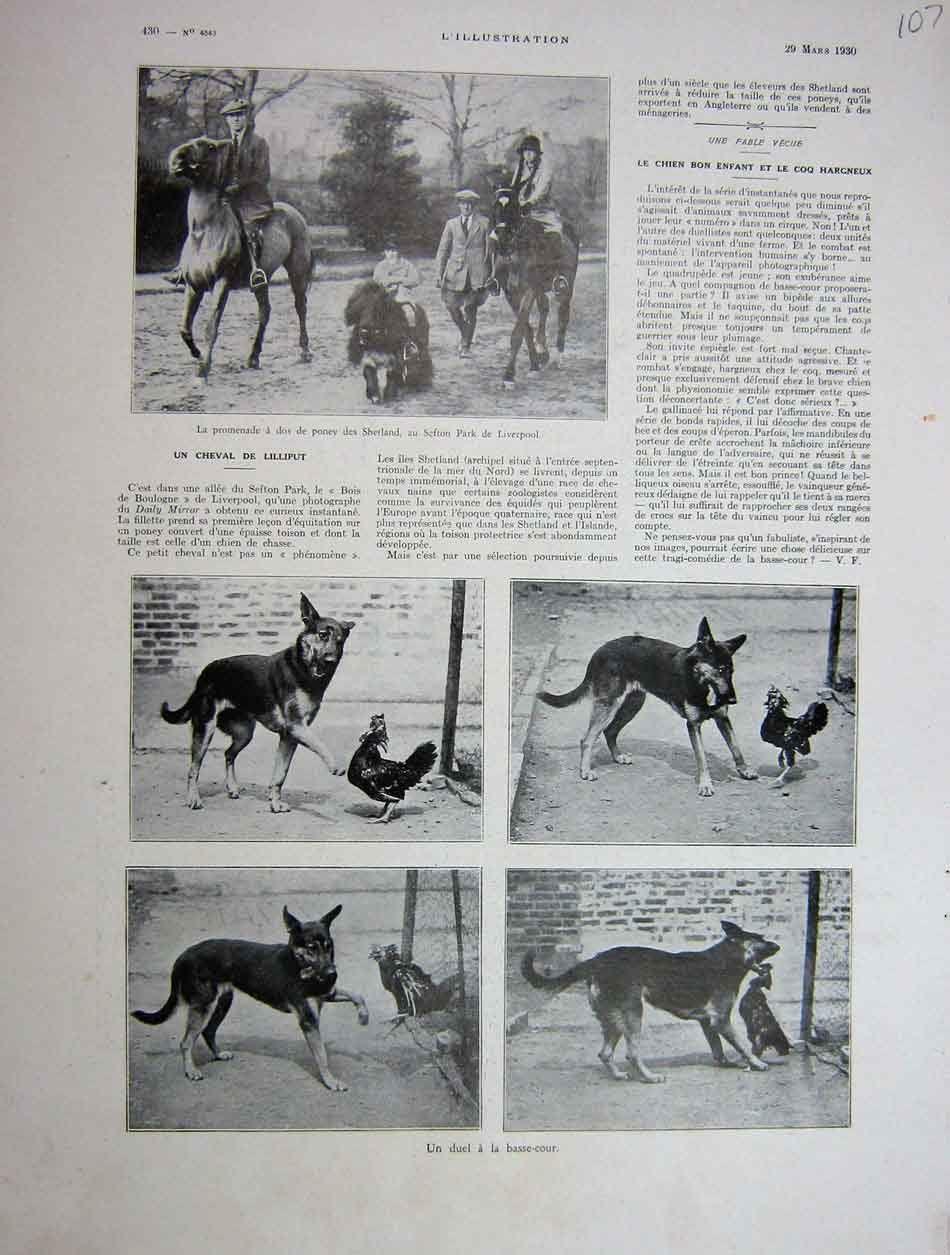 [Print 1930 French Lilliput Horse Dog And Chicken 107E201 Old Original]