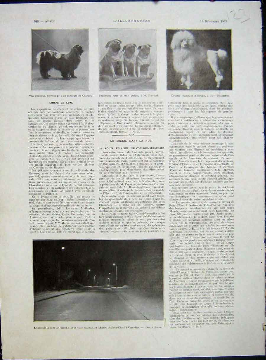 [Print Dogs Pekinese Poodle Dog Versailles French 1933 123E212 Old Original]