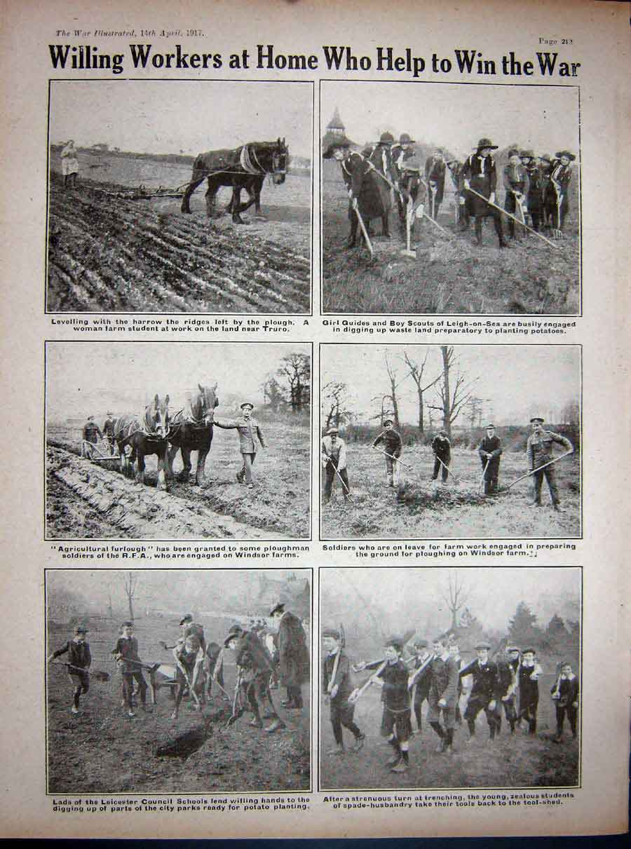 [Print 1917 Ww1 Dogs French Soldier Cultivation Ploughing Farm 313Re271 Old Original]