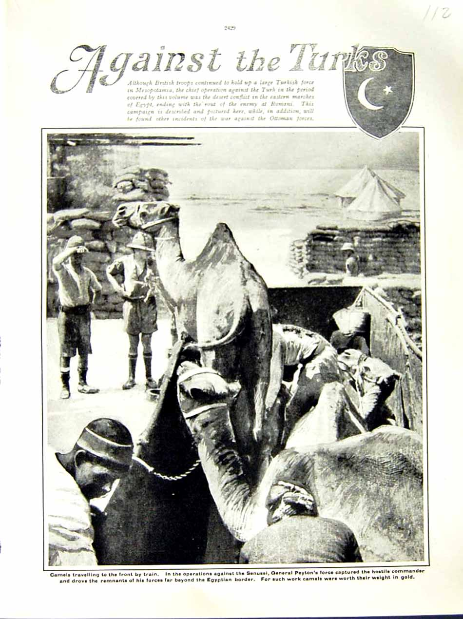 [Print 1916 World War Camels Senussi General Peyton Soldiers 112E287 Old Original]