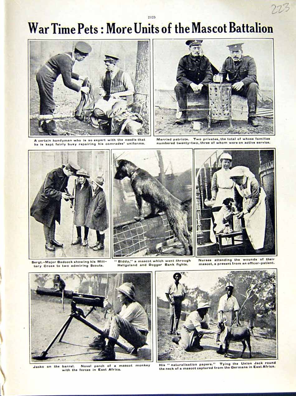 [Print 1916 World War Africa Soldiers Nurses Badcock Mascot 223E291 Old Original]