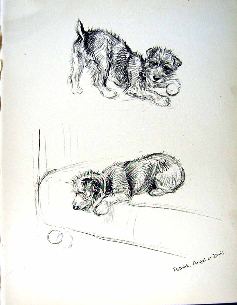 [Print C1933 Dogs Sketch Barker Terrier Pets Animals Playing 108E345 Old Original]
