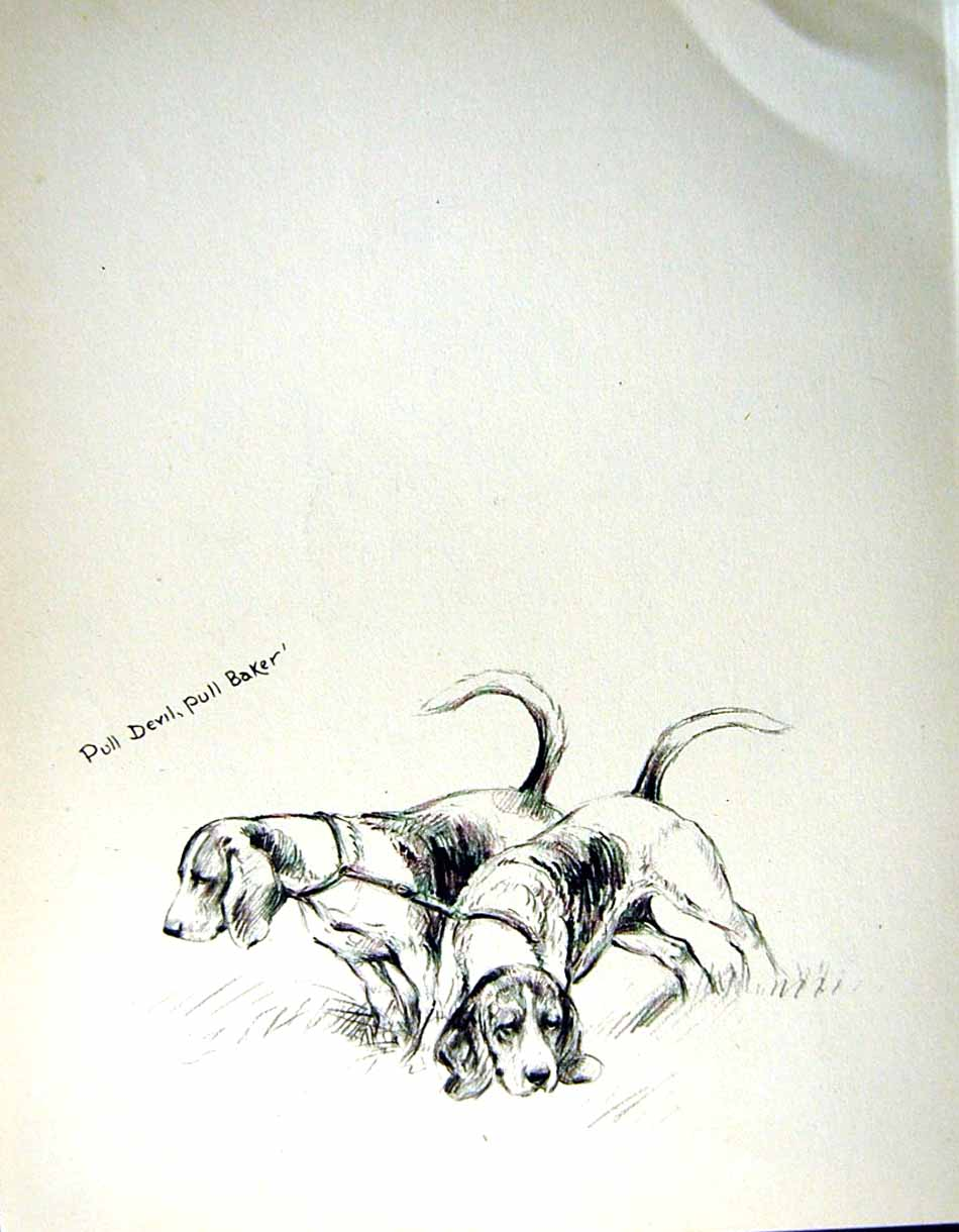 [Print C1933 Dogs Sketch Barker Beagles Wall Country Pets 121Re345 Old Original]