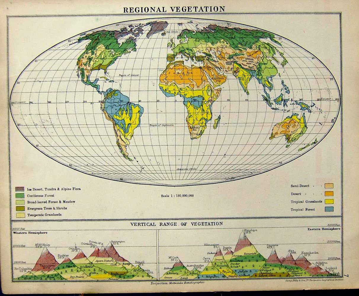 russia vegitation map with Category on Category additionally Story as well 5332653 together with Wel e To The Jungle additionally Category.