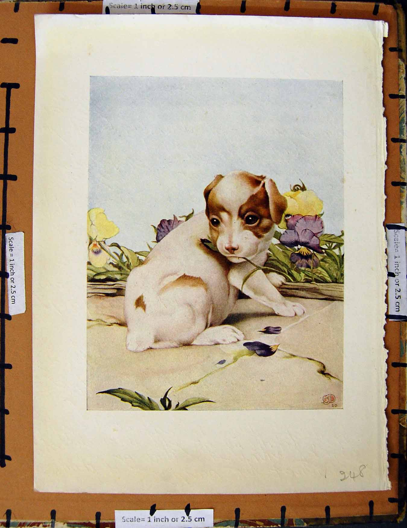 [Print C1950 Nursery Rhyme Puppy Dog Flowers Colour 248E378 Old Original]