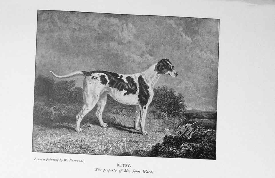 [Print 1900 Portrait Betsy Dog Hunting John Warde 912F116 Old Original]
