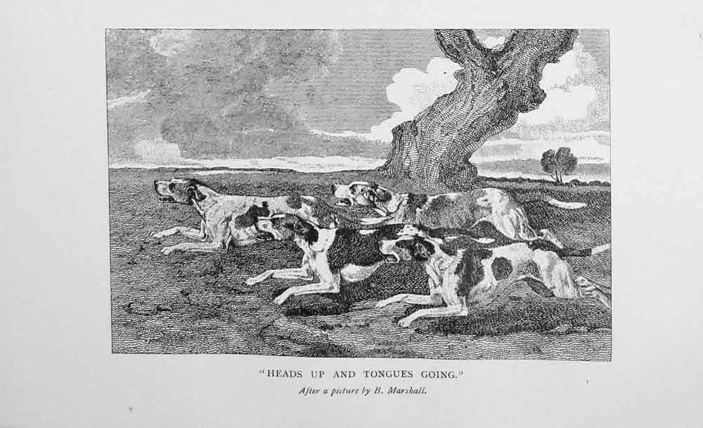[Print 1901 Hunting Hounds Dogs Baily'S Sport 959F116 Old Original]