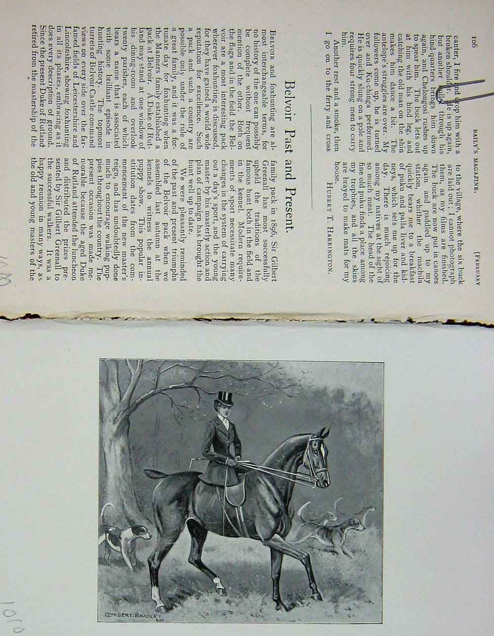 [Print 1902 Portrait Belvoir Horse Lady Hunting Dogs 1010F117 Old Original]