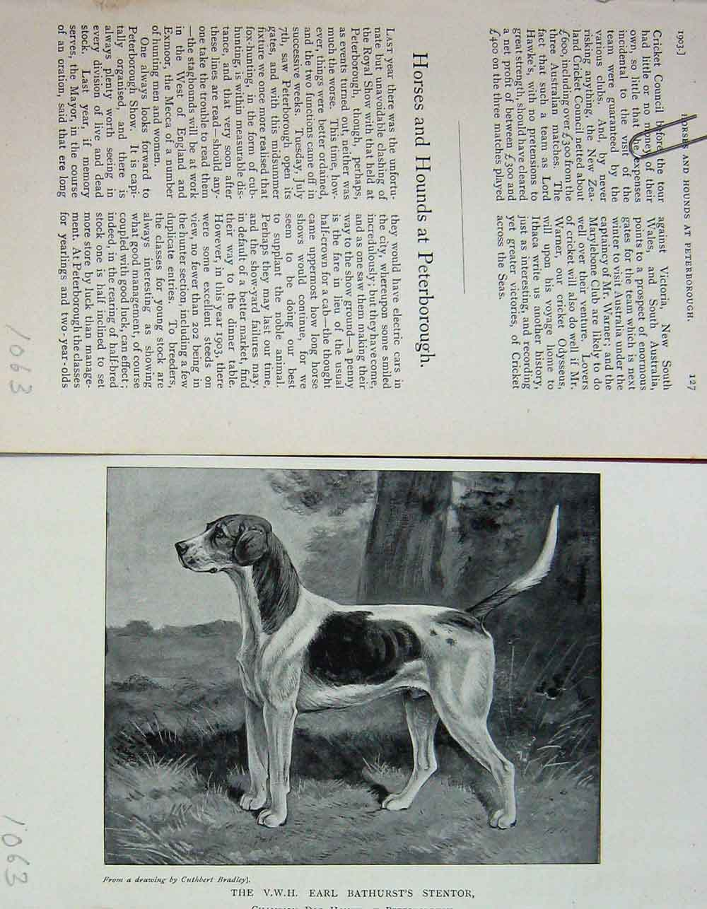 [Print 1903 Portrait Earl Bathurst'S Stentor Hound Dog 1063F117 Old Original]