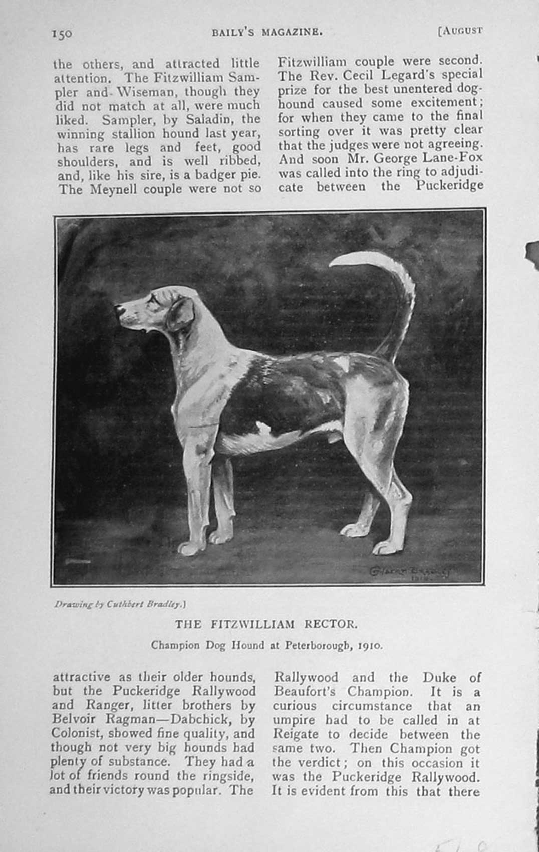 [Print 1910 Fitzwilliam Rector Champion Hound Dog Peterborough 548F123 Old Original]