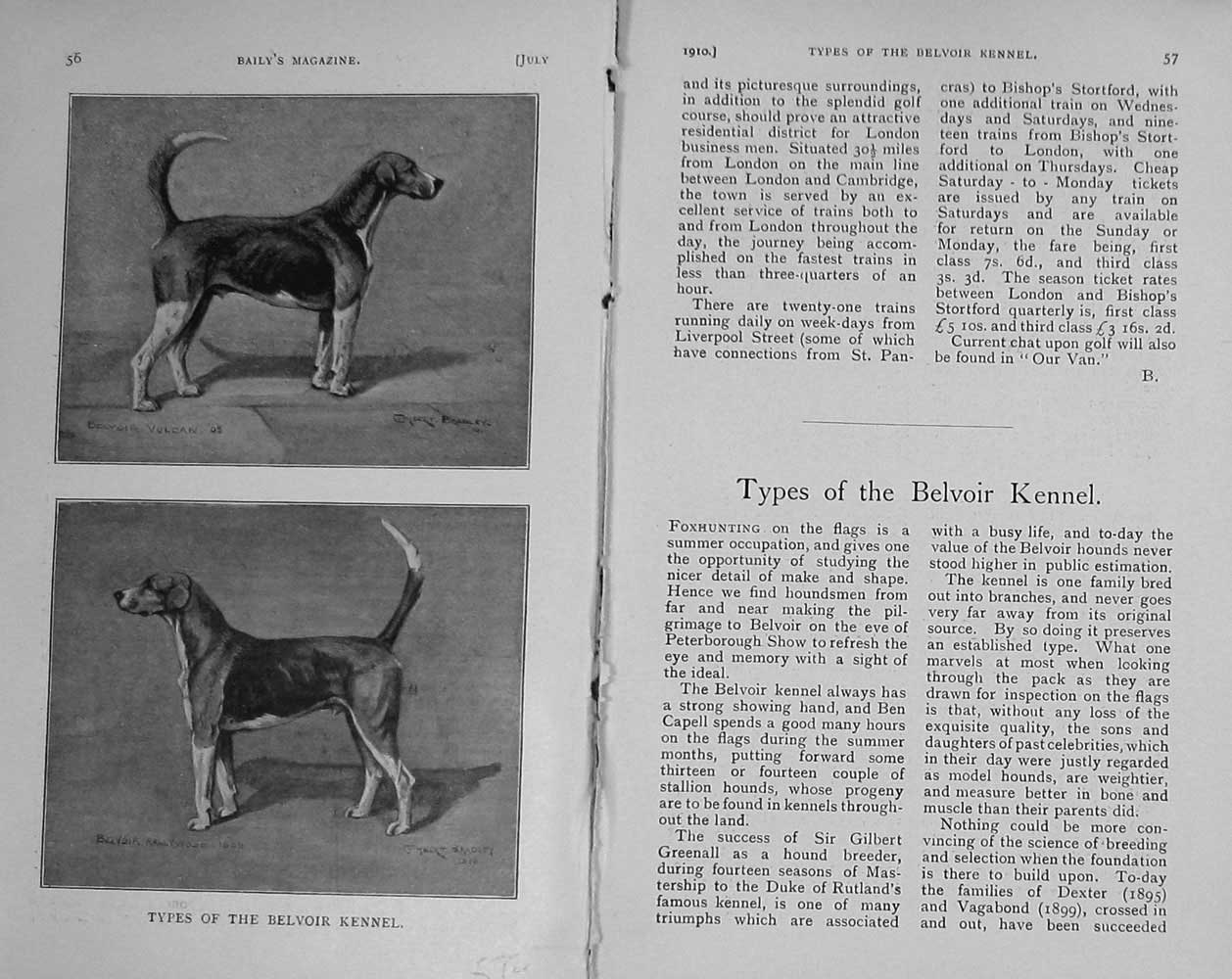 [Print 1910 Portrait Dogs Hounds Belvoir Kennel Hunt 572F123 Old Original]