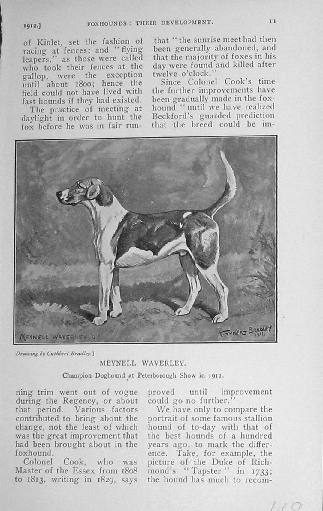 [Print 1912 Meynell Waverley Dog Hound Peterborough Show 669F124 Old Original]