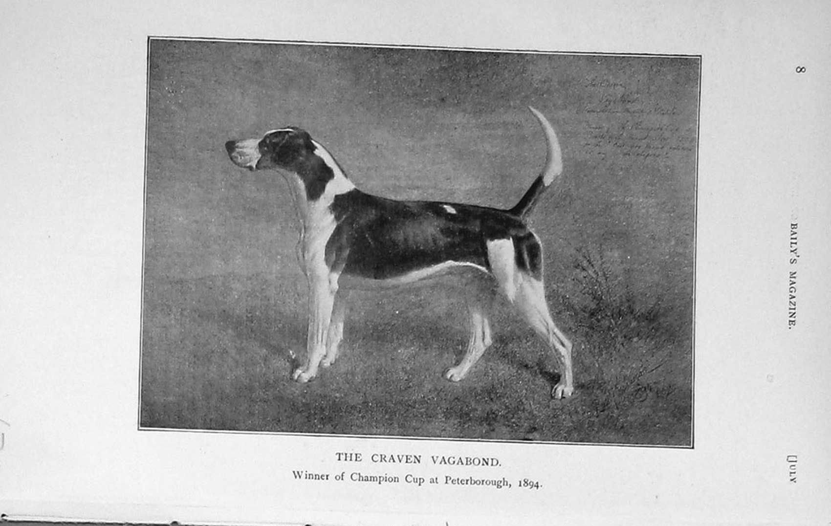 [Print 1912 Craven Vagabond Hound Dog Peterborough Show 670F124 Old Original]