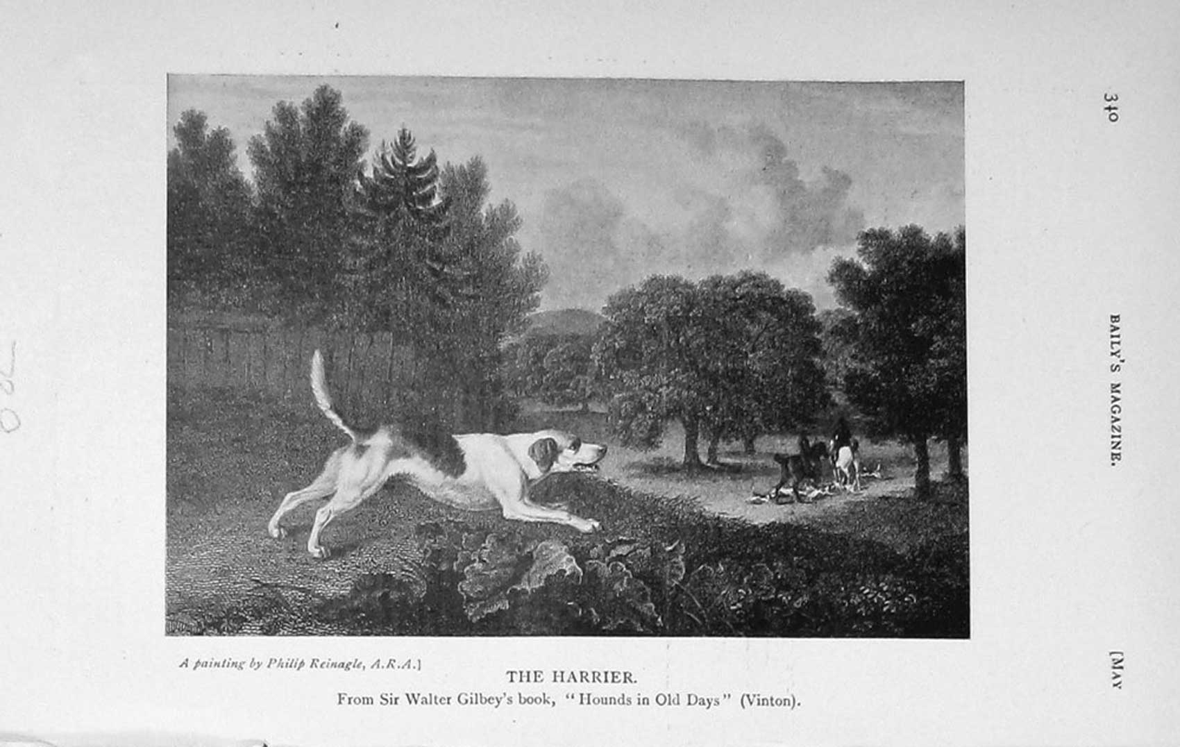 [Print 1913 Harrier Hound Dog Hunting Country 739F124 Old Original]