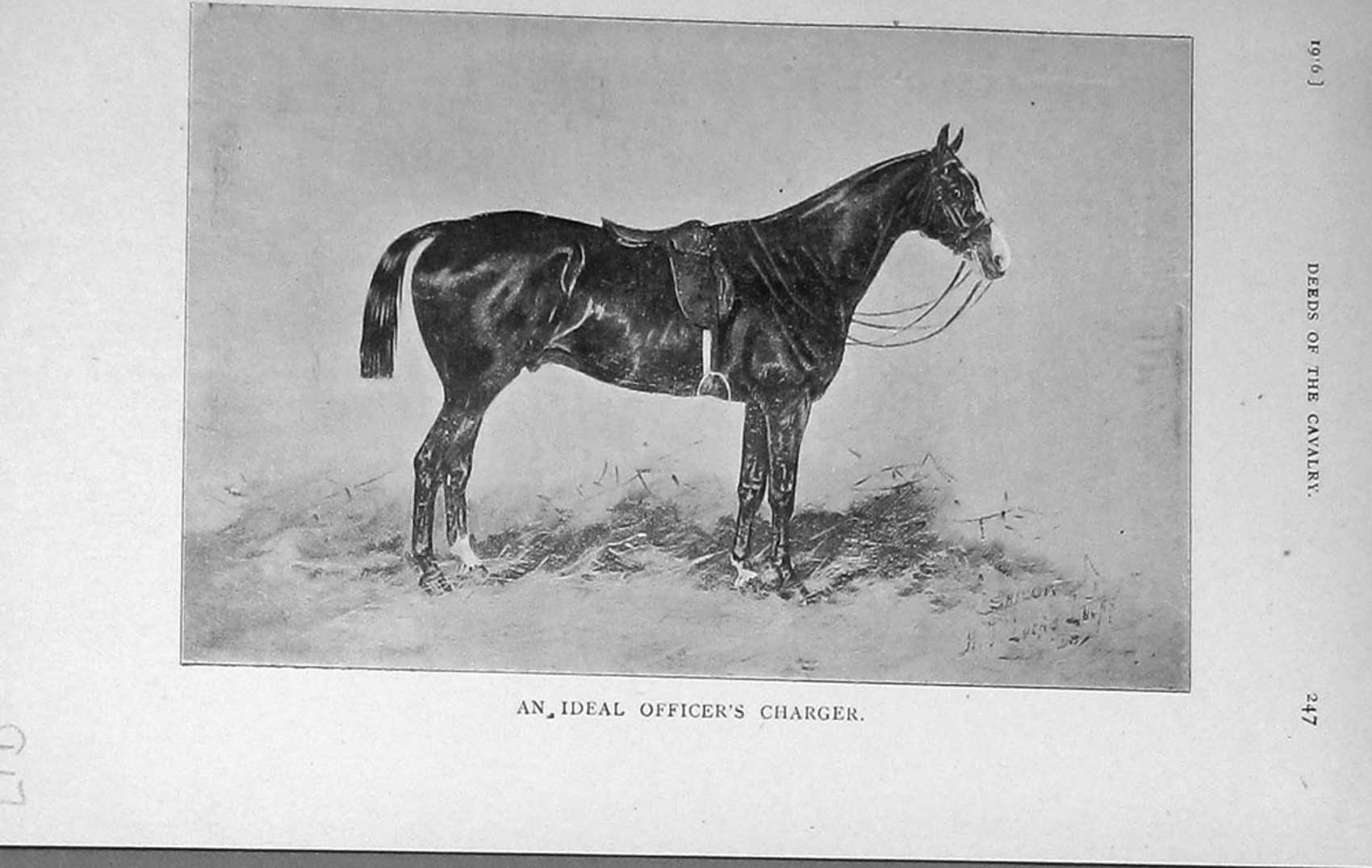 [Print 1916 Officers Charger Horse War Cavalry 917F125 Old Original]