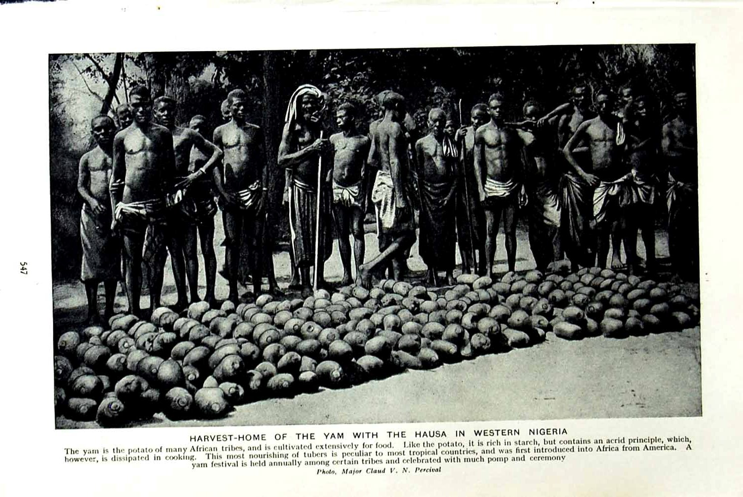 [Print C1920 Harvest Yam Hausa Nigeria Africa Earth Houses 547F151 Old Original]