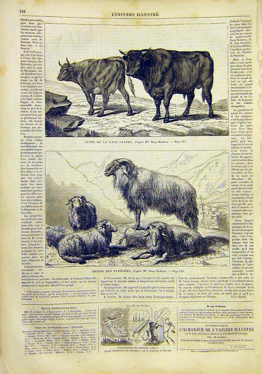 Print Cattle Beef Bonheur Pyrenees Goats French 1859 12Lun0 Old Original