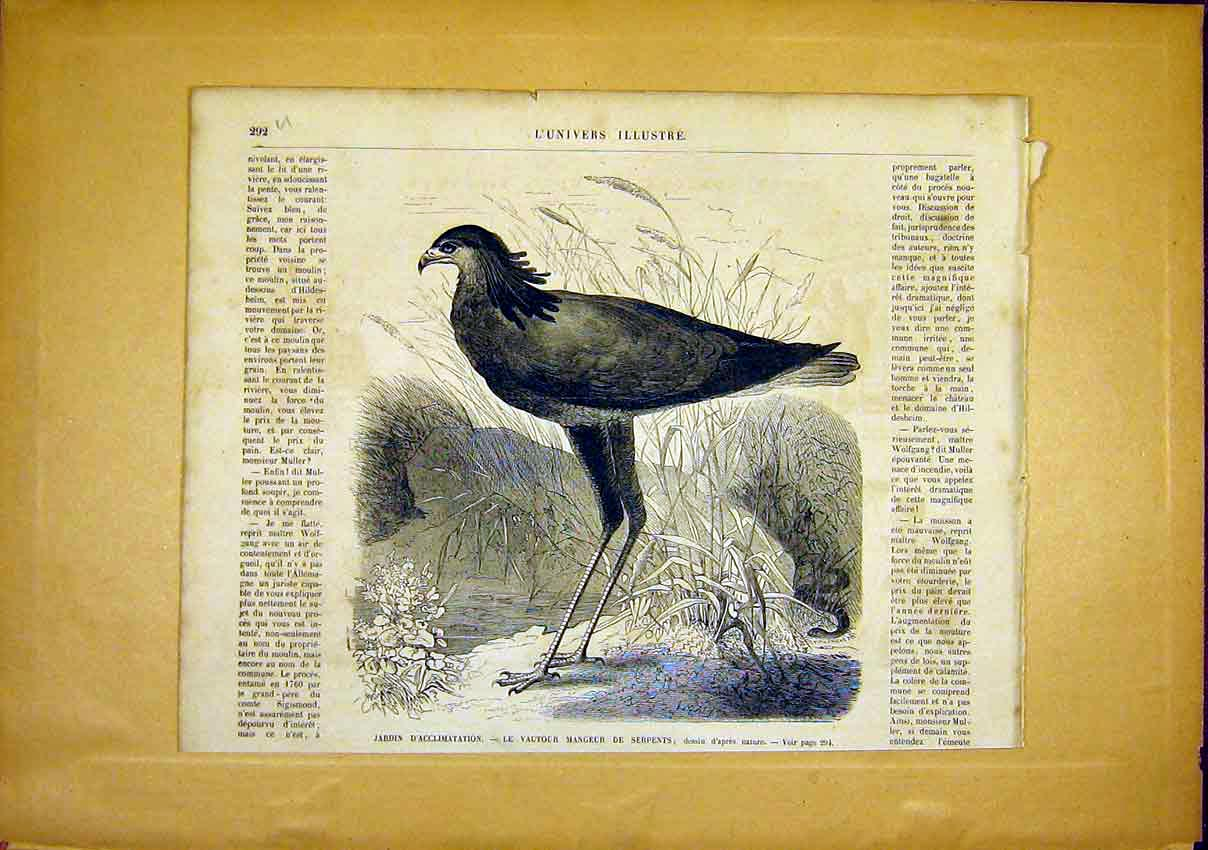 Print Bird Snake-Eater French 1866 Animal 92Ulun0 Old Original