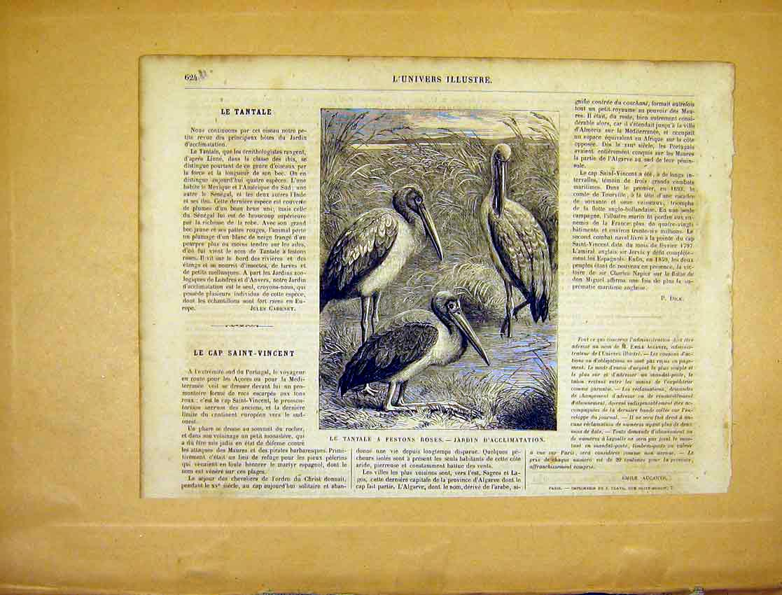 Print Bird Tantale Festons Roses Animal French 1865 24Ulun1 Old Original