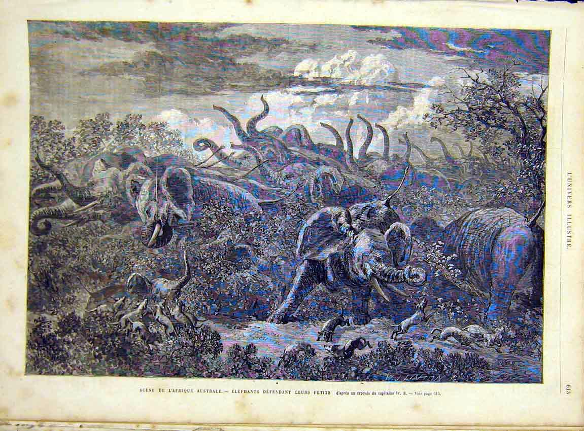 Print Africa Elephants Dogs Hunt French 1866 13Lun1 Old Original