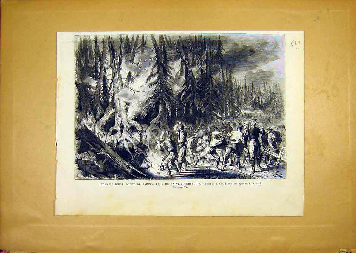 Print Forest Sapins Saint-Petersburg Russia French 1868 29Llun1 Old Original