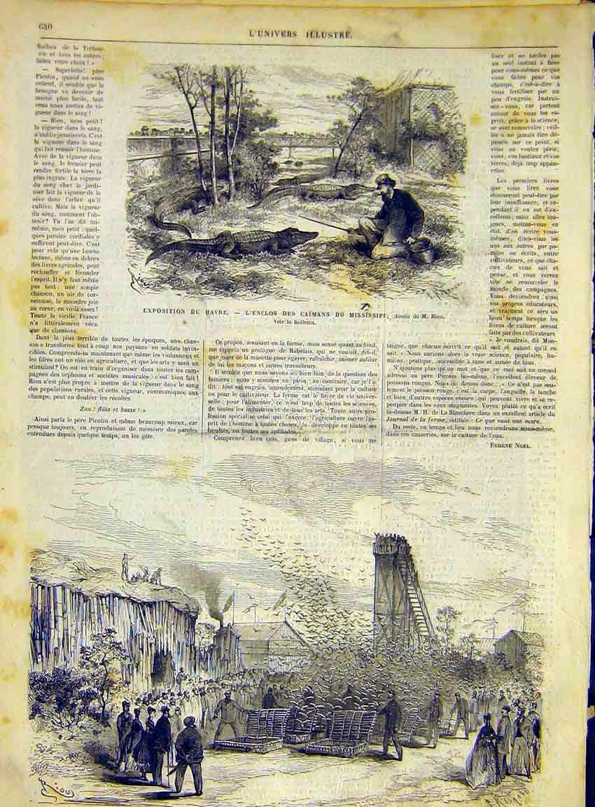 Print Havre Caiman Mississipi Pigeons French 1868 40Lun1 Old Original