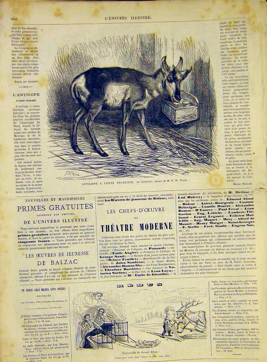 Print Antelope Deer Buck California French 1868 Animal 80Lun1 Old Original
