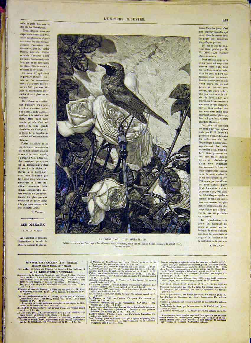 Print Rossignol Mural Bird Oiseaux Rose French 1880 13Lun1 Old Original