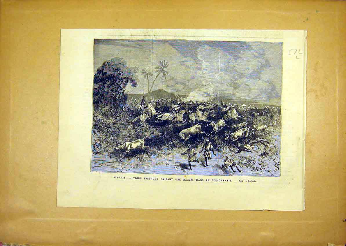 Print Algeria Tribal Insurgence Oranais Cattle 1881 72Llun1 Old Original
