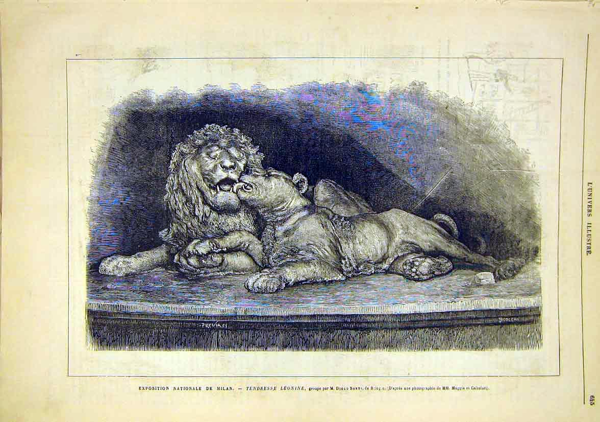 Print National Exhibition Milan Italy Lions Sarti 1881 45Lun1 Old Original