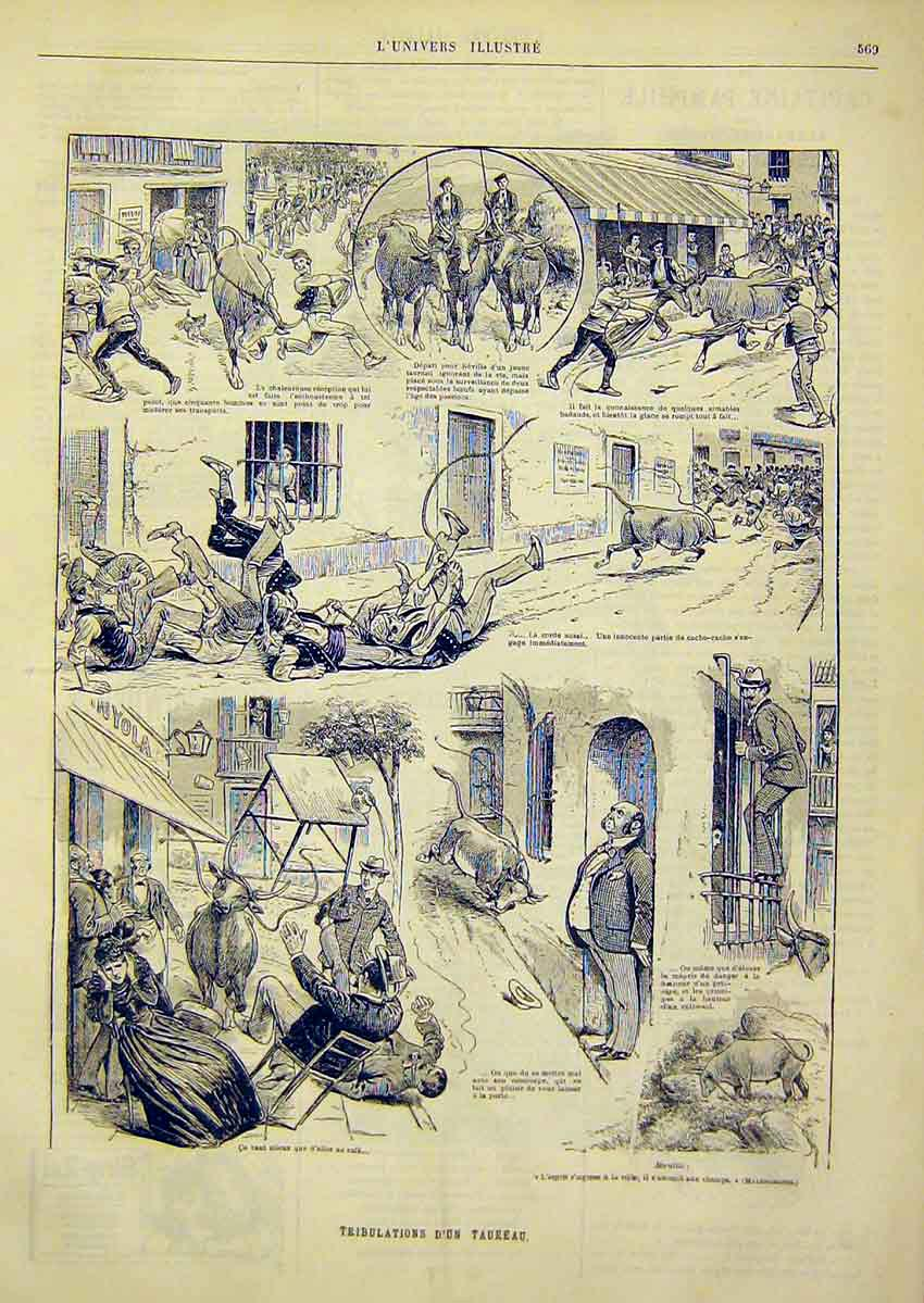 Print Sketches Tribulations Taureau Bull French 1891 69Lun1 Old Original