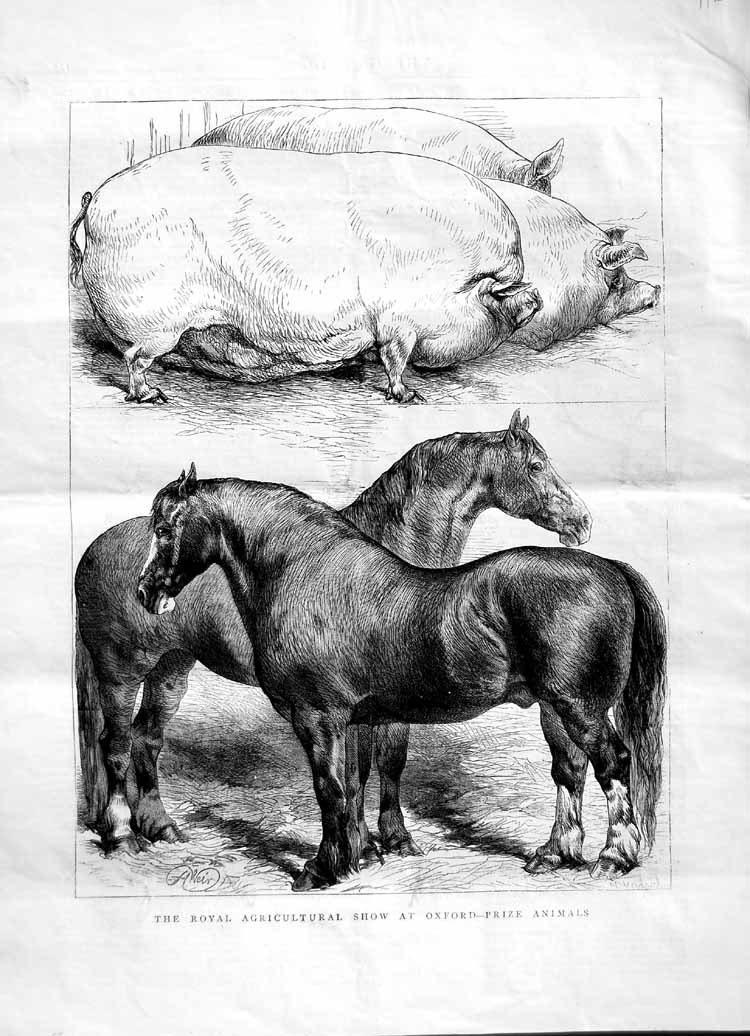 [Print 1870 Royal Agricultural Show Oxford Horses Pigs 116M102 Old Original]
