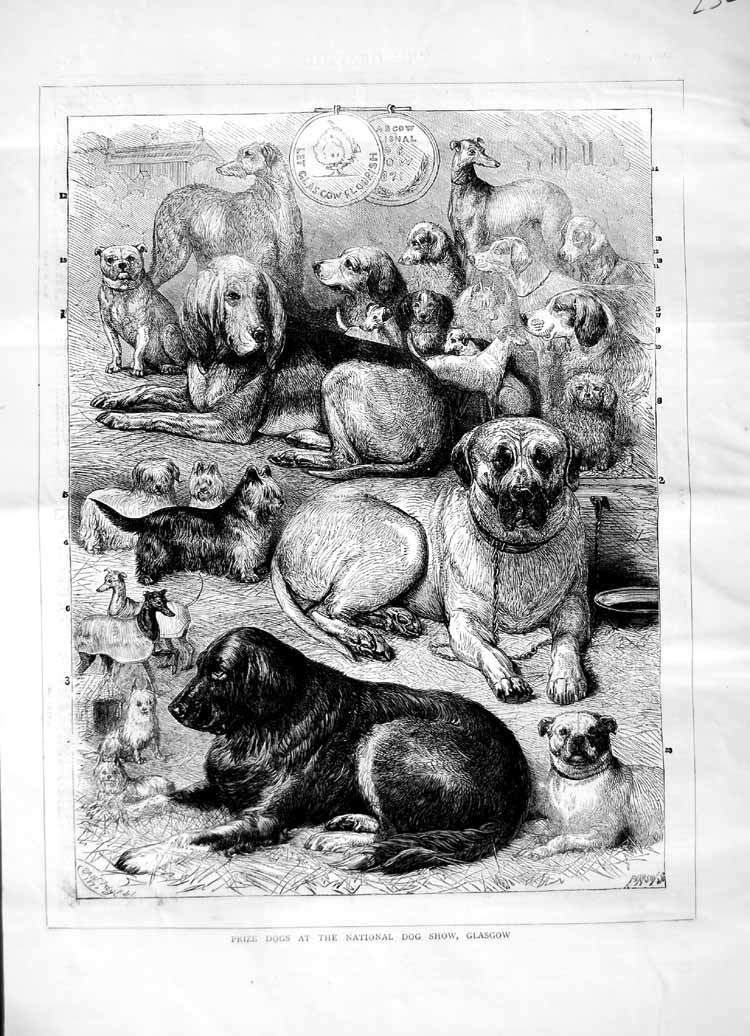 [Print 1871 Prize Dogs National Show Glasgow Pets Animals 232M103 Old Original]