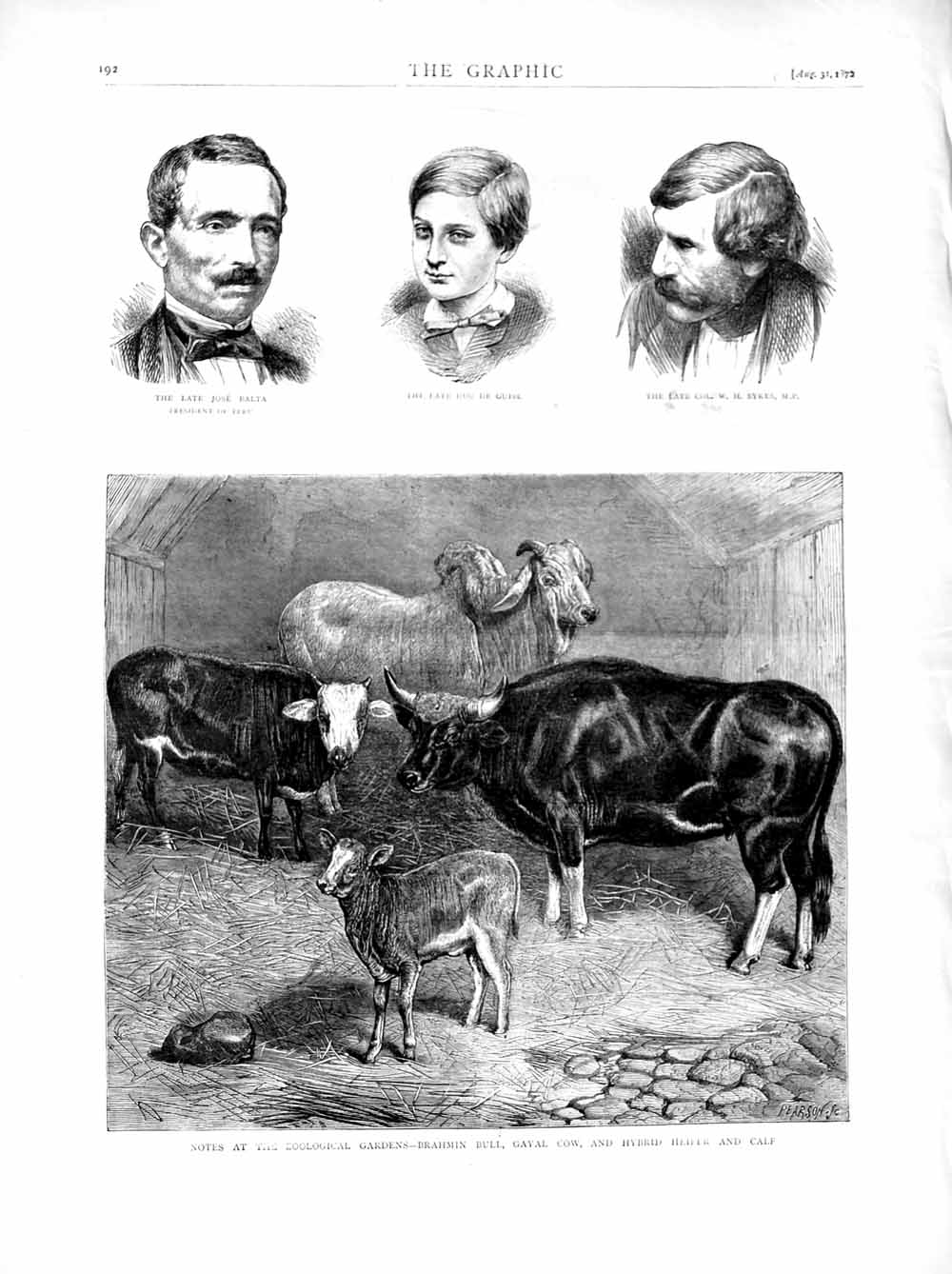[Print 1872 Balta Guise Sykes Brahmin Bull Cow Heifer Calf 192M106 Old Original]