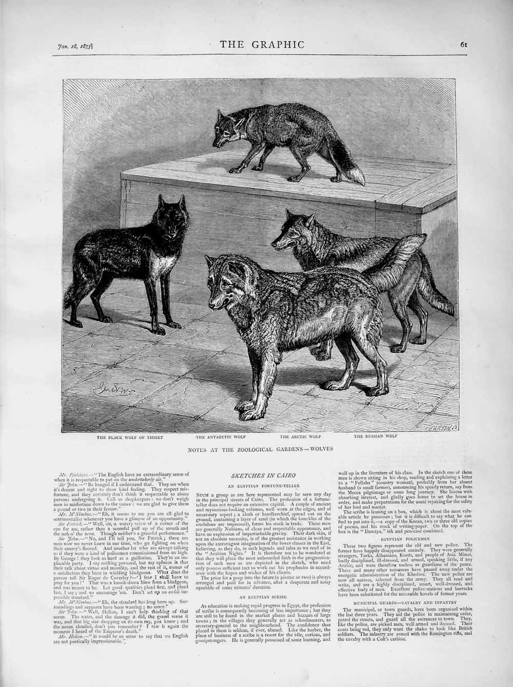 [Print 1873 Zoological Gardens Black Arctic Russian Wolves  Old Original]